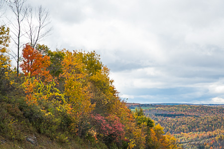 fall color in upstate NY