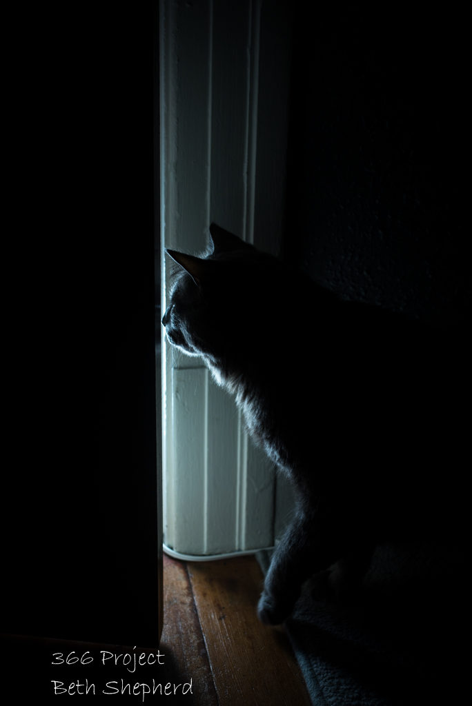 cat and closet lighting