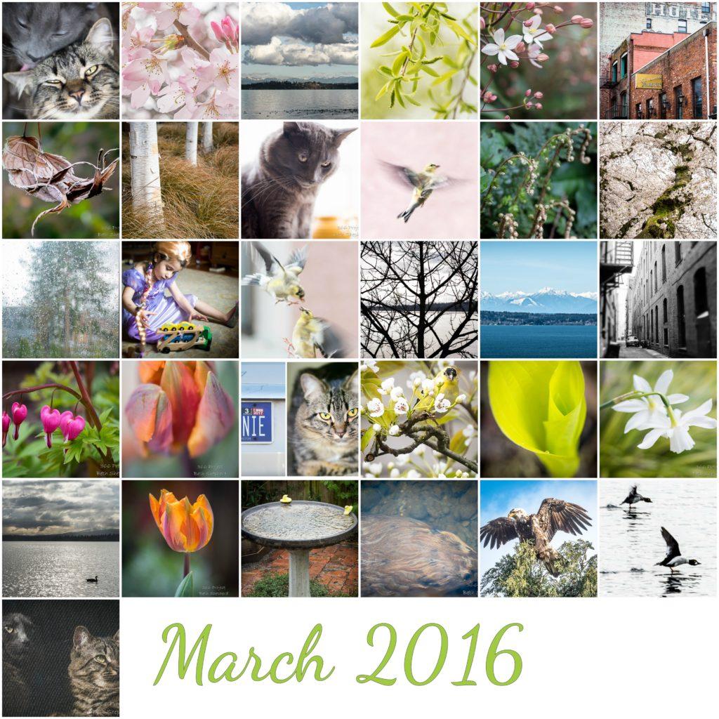 March 2016 photos