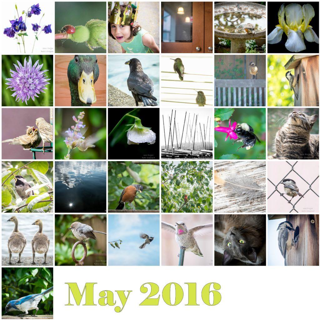 May 2016 photos
